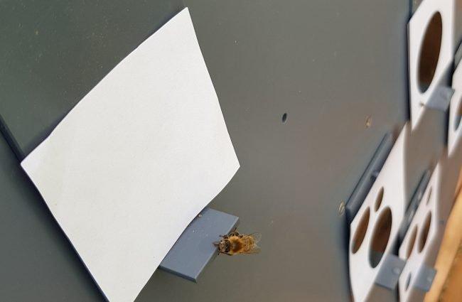 Фото - Пчелы понимают, что такое ноль