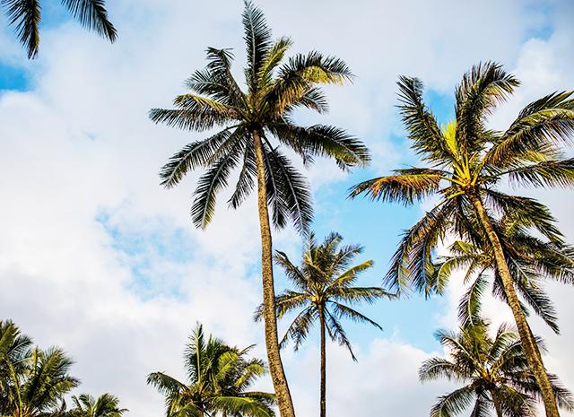 Фото - Ужин по-гавайский: ахи-поке с тунцом