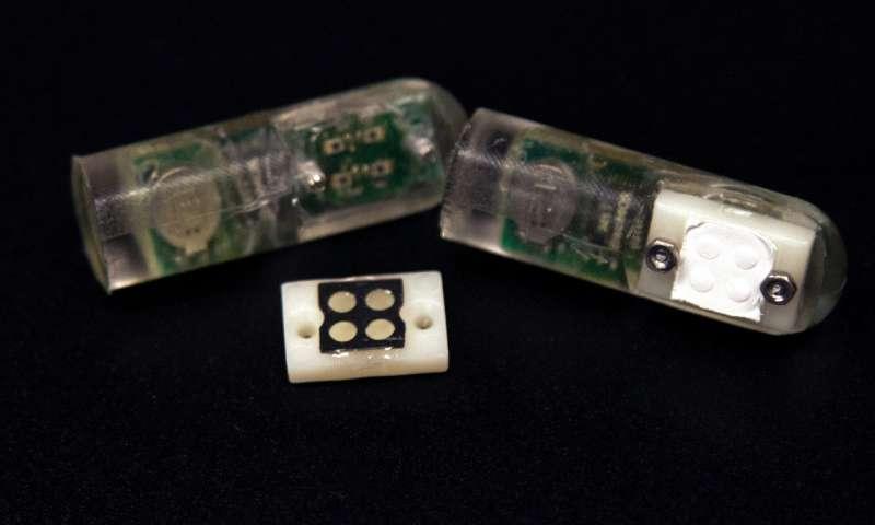 Фото - «Бактерии-на-чипе» помогут диагностировать болезнь изнутри