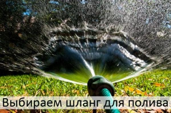 Фото - Садовый шланг для полива: 7 советов по выбору