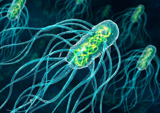 Фото - Бактерий смогли превратить в нанороботов