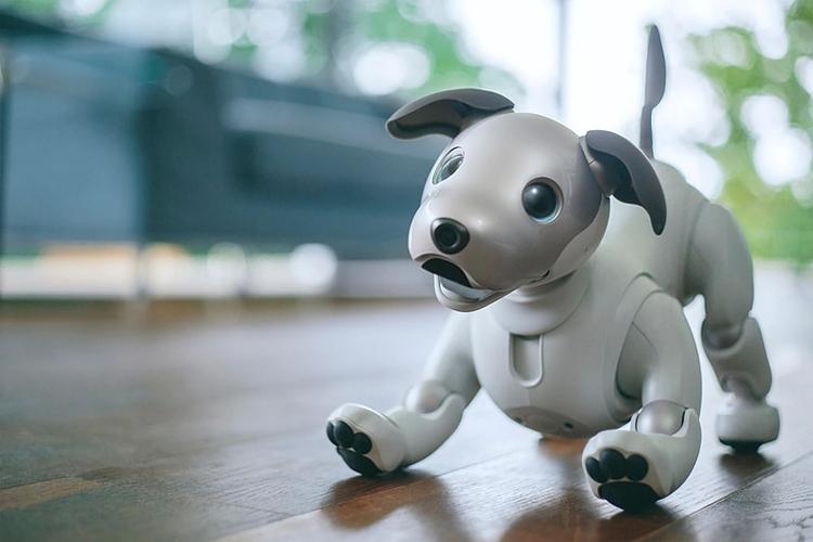 Фото - Робособака Sony aibo нового поколения стала более естественной и умной»