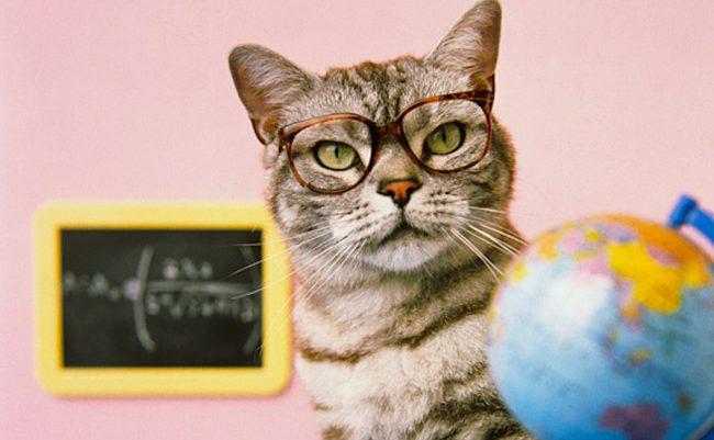 Фото - Представлен робот-кот для обучения детей