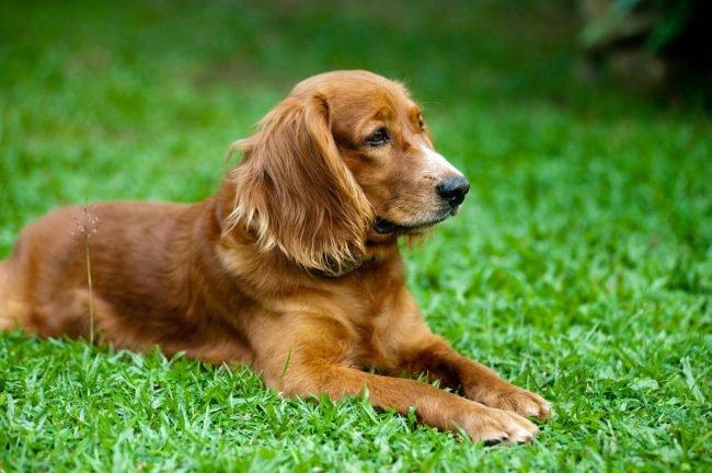 Фото - Как общение с собакой влияет на человеческий организм