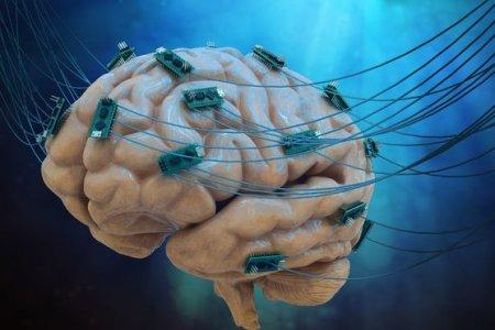 Фото - Учёные нашли стволовые клетки, отвечающие за регенерацию мозга