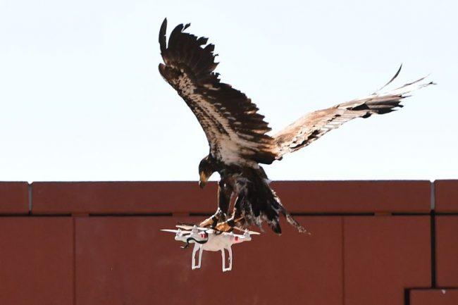 Фото - На защиту сериала «Игра престолов» от дронов и спойлеров встанут орлы