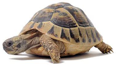 Фото - Корейские учёные установили телепатическую связь с черепахой