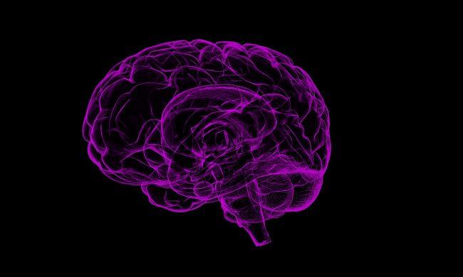 Фото - Хотя гены влияют на интеллект, мы не можем усовершенствовать ум