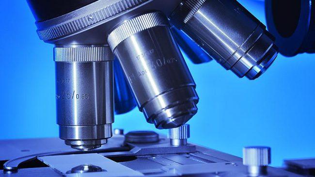 Фото - Создан микроскоп, позволяющий наблюдать за движением клеток внутри организма
