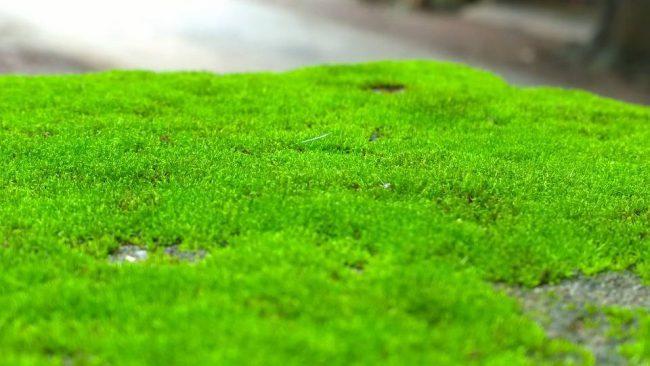 Фото - Ученые обнаружили, что зеленый мох может быть полезен для здоровья