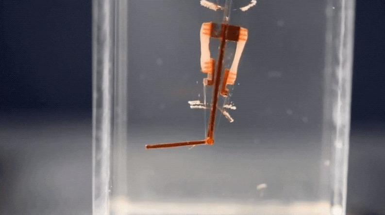 Фото - Киборги здесь: ученые поместили живые клетки в палец робота